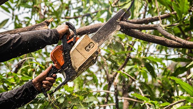 Muške ruke drže uključenu testeru za drva i skraćuju grane na drvetu