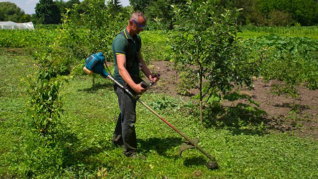 Stariji čovek uređuje travu u voćnjaku korišćenjem trimera